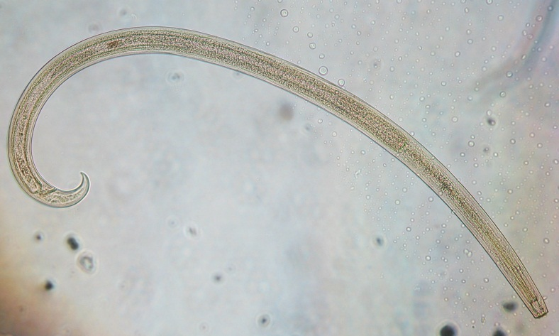 Researching nematodes in Canada