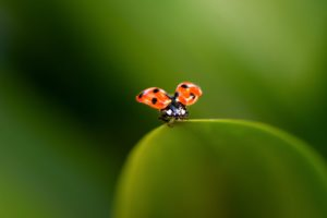 Are All Bugs Considered The Enemy In Your Garden - May Blog